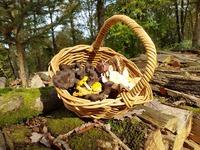 Sortie nature  : les champignons