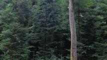 Parcours Forestier - Bagnoles-de-l'Orne