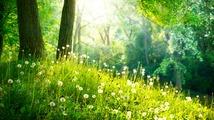Nature en famille - Bagnoles-de-l'Orne