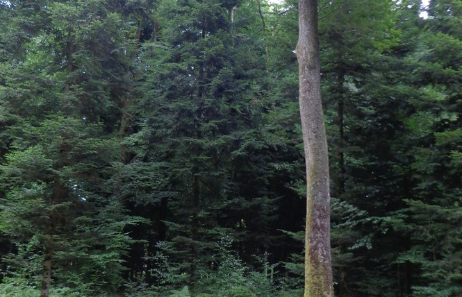 Parcours Forestier 1 - Bagnoles-de-l'Orne