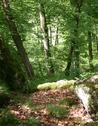 Bagnoles-de-l-orne-randonnée