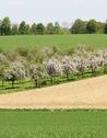 bagnoles-orne-manoir-durcet-ferme-calvados-terroir-savoir-faire-visite-cidre-pomme-champ-verger-campagne